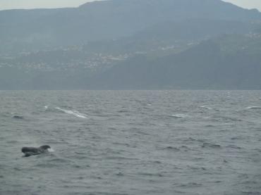 ...es sind Wale :)