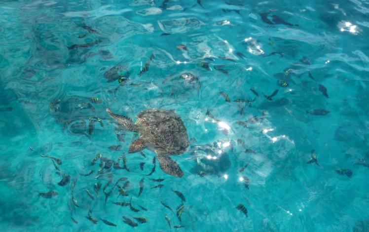 2011-11-18-phuket-7-similan-islands-016