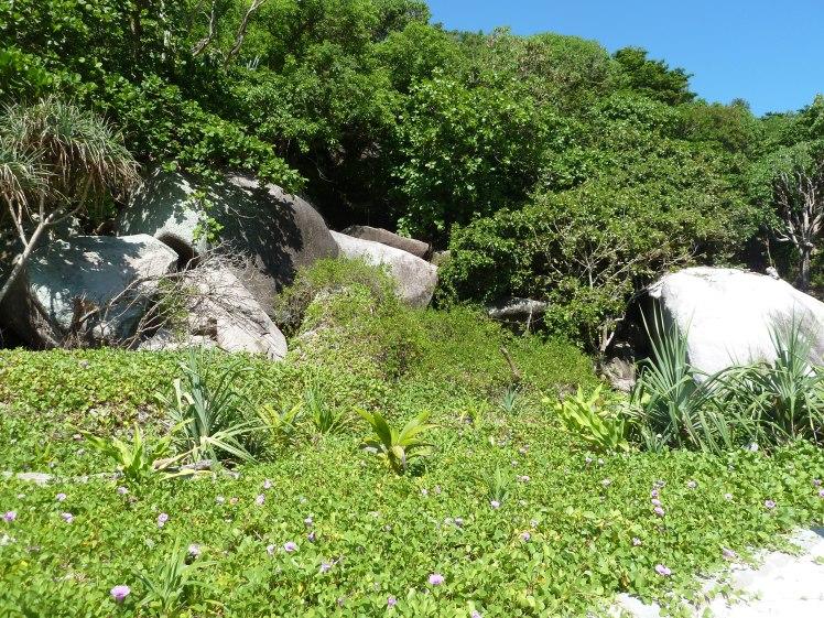 2011-11-18-phuket-7-similan-islands-077